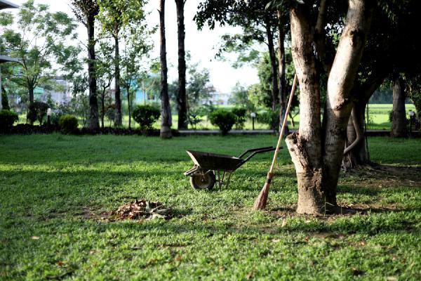 plant a tree as a family activity